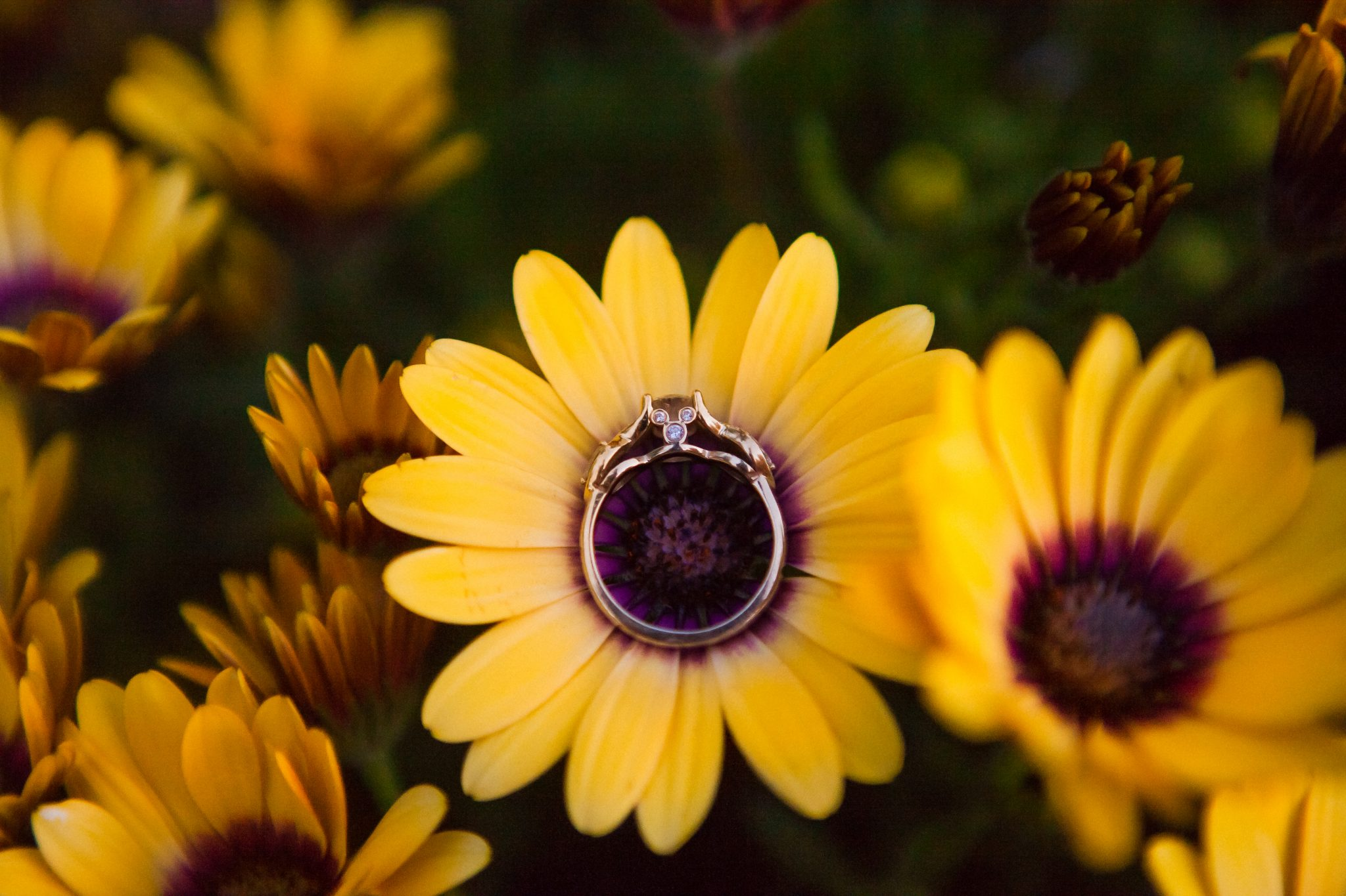 Artistic photo of an engagement ring in a sunflower