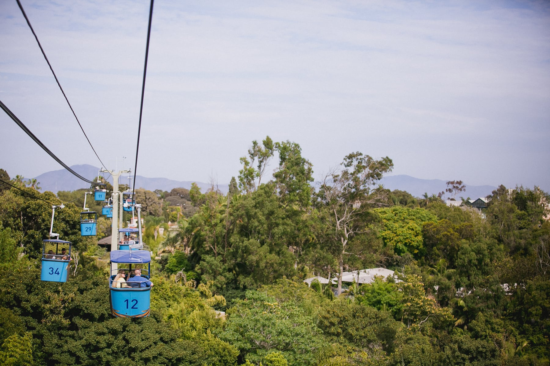San Diego Zoo engagement session in the aerial tram